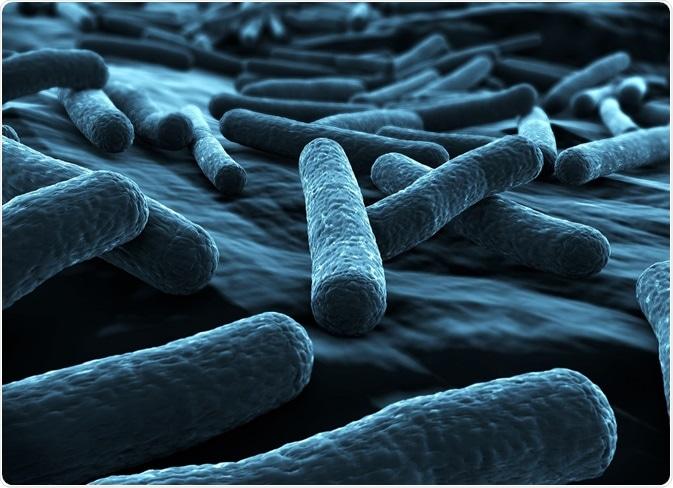 gram_negative_bacteria